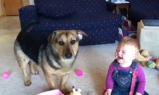 Τι κάνουν ένα μωρό κι ένας σκύλος όταν δουν σαπουνόφουσκες; Δείτε το ξεκαρδιστικό βίντεο!