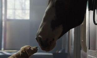 Το κουταβάκι και το άλογο. Η φιλία τους μας έκανε να δακρύσουμε (βίντεο)