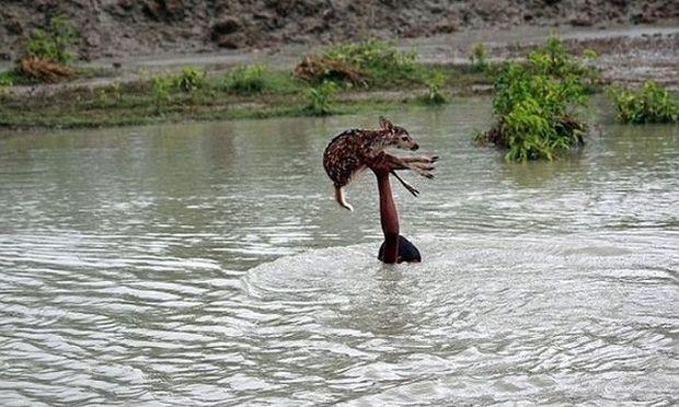 Αγόρι βούτηξε σε ορμητικά νερά για να σώσει μωρό ελαφάκι (φωτογραφίες)