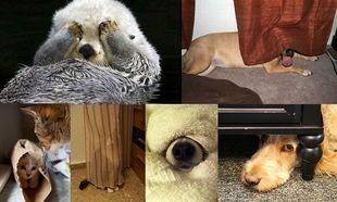 «Ψάξε, ψάξε δε θα με βρεις»- Όταν οι τετράποδοι φίλοι μας παίζουν κρυφτό! (εικόνες)