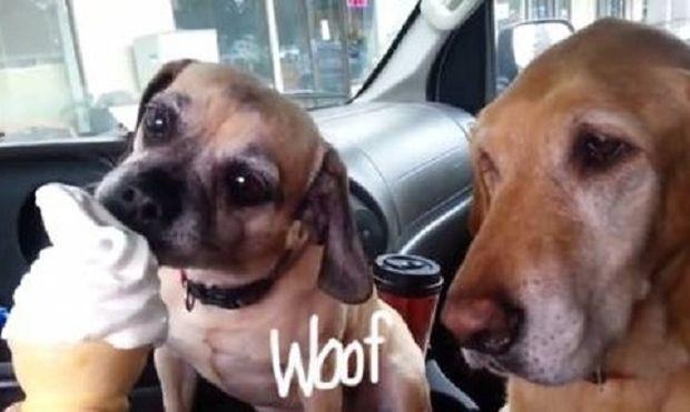 Τι συμβαίνει όταν δύο σκυλάκια δουν ένα παγωτό; (βίντεο)