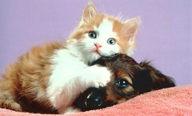 Είστε σίγουροι ότι η γάτα σας δεν είναι σκύλος;  (βίντεο)