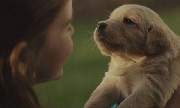 Το κορίτσι και το κουτάβι. Η φιλία που κρατάει μια ζωή (βίντεο)