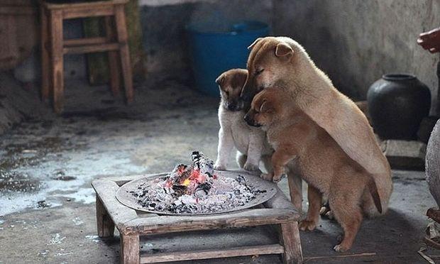 Συγκινητικό! Μαμά και κουταβάκια ζεσταίνονται γύρω από τη φωτιά! (εικόνες)