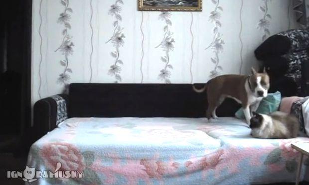 Δεν μπορείτε να φανταστείτε τι κάνει αυτός ο σκύλος όταν είναι μόνος του στο σπίτι! (βίντεο)