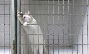 Αυτή η γάτα είναι ο βασιλιάς της απόδρασης! Δείτε γιατί (βίντεο)