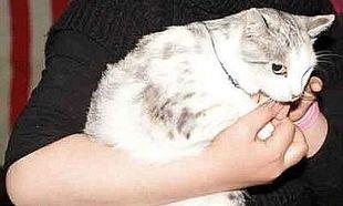 H συγκινητική ιστορία της μικρής μετανάστριας που διέσχισε τη Μεσόγειο έχοντας μαζί τη γάτα της (εικόνα)