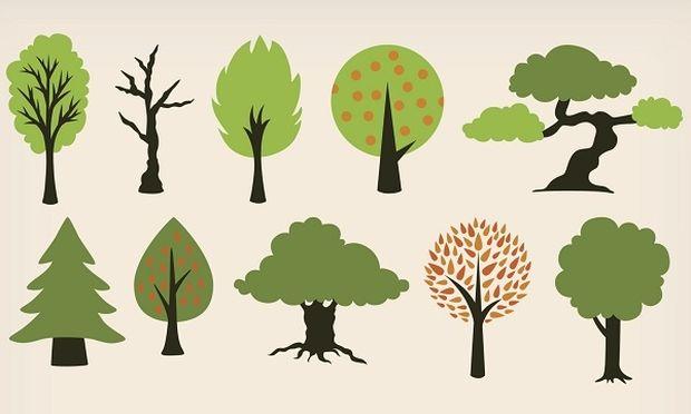 Tι... δέντρο είναι το παιδί σας; Ενα αλλιώτικο τεστ προσωπικότητας!