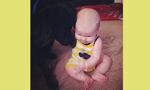 Σκύλος, φύλακας- άγγελος, ειδοποίησε τους γονείς ότι η μπέιμπι σίτερ κακοποιούσε το μωρό! (βίντεο)