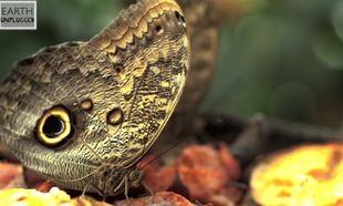Εκπληκτικό! Δείτε σε slow motion πως πετάνε οι πεταλούδες (βίντεο)