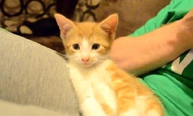 Το πανέμορφο γατάκι προσπαθεί να μείνει ξύπνιο, αλλά…(βίντεο)