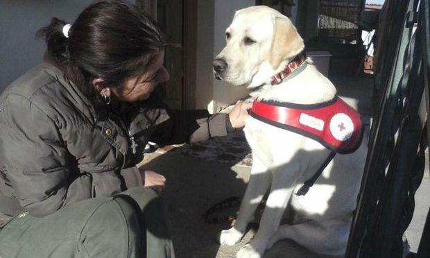 Λούνα, ο σκύλος που δίνει χαρά στα παιδιά που το έχουν ανάγκη! (εικόνες)