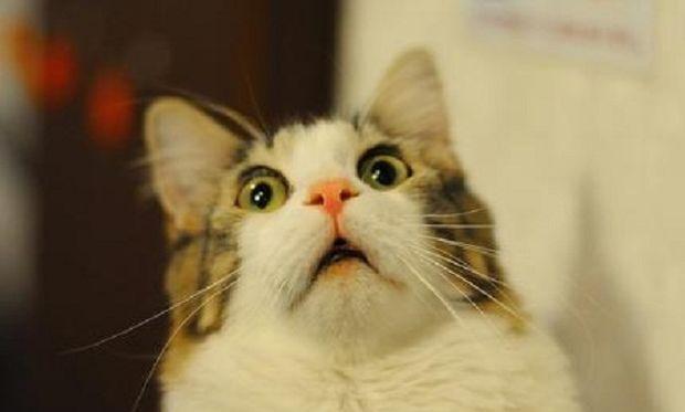 Δείτε τι γίνεται όταν μία γάτα δει ξαφνικά μία... κάλτσα μωρού! (βίντεο)