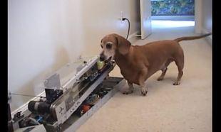 Απίθανο! Εφτιαξε στον σκύλο του μηχάνημα για να του πετάει το μπαλάκι (βίντεο)