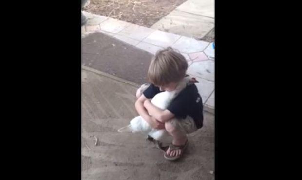 Το αγοράκι και η κότα: Η πιο τρυφερή αγκαλιά του κόσμου  (βίντεο)