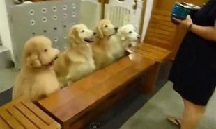 Δείτε τι κάνουν αυτά τα αξιολάτρευτα σκυλάκια πριν φάνε! Δε θα το πιστεύετε! (βίντεο)