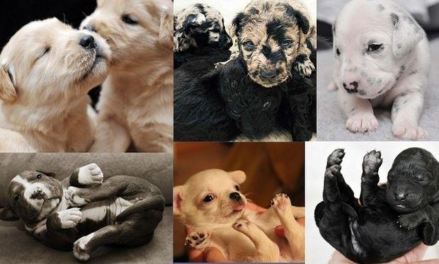 Είναι αξιολάτρευτα! Μόλις γεννήθηκαν και ποζάρουν! (εικόνες)