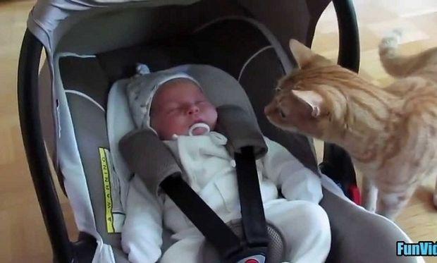 Οταν ένα νεογέννητο «φρικάρει» ένα γατί! (βίντεο)