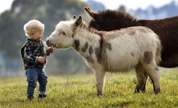 Πόσο τρυφερό! Η φιλία ενός 15 μηνών αγοριού με δύο γαϊδουράκια! (εικόνες)