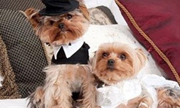 Τέτοιο γάμο σίγουρα δεν έχετε ξαναδεί! Ο γαμπρός και η νύφη ήταν…σκυλάκια! (βίντεο)