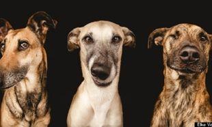Όταν τα σκυλιά ποζάρουν μας αφήνουν άφωνους! (εικόνες)