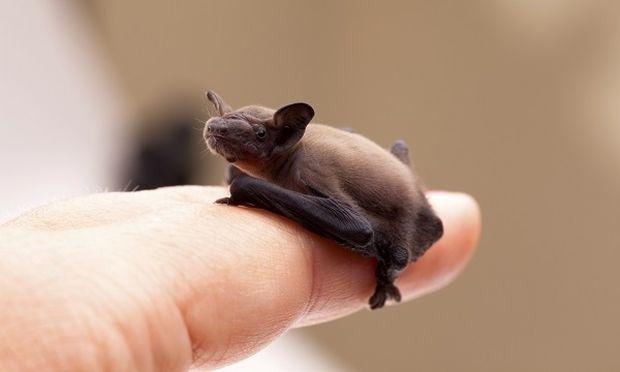Φιλόζωη βρήκε μωρό νυχτεριδάκι στο μπαλκόνι της! (μοναδικές φωτογραφίες)