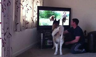 Απίστευτο! Σκύλος προσπαθεί να σώσει αγόρι από μία αρκούδα μέσα από την τηλεόραση (βίντεο)