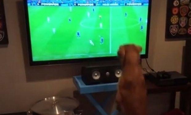 Αυτός ο σκύλος έχει «τρελάνει» το διαδίκτυο. Είναι κολλημένος με το Μουντιάλ (βίντεο)