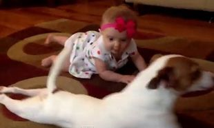 Μοναδικό! Μωρό μαθαίνει να μπουσουλάει με τη βοήθεια του σκύλου! (βίντεο)