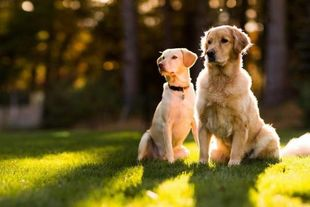 Doggrin: Το πρώτο ελληνικό site γνωριμιών για σκύλους!