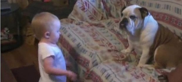 Αυτό δεν το έχετε ξαναδεί. Μωρό μαλώνει ένα... μπουλντόγκ! (βίντεο)