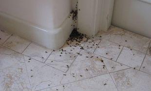 Πώς θα απαλλαγώ από τα μυρμήγκια με φυσικό τρόπο;