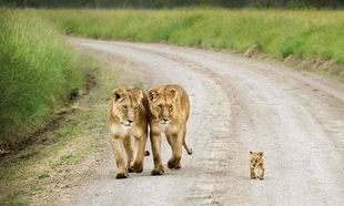 Μαθήματα μητρότητας από το ζωϊκό βασίλειο!