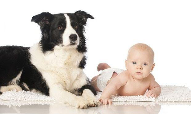 Σκυλί κάνει μπάνιο ένα μωρό με... τον δικό τρόπο! (βίντεο)