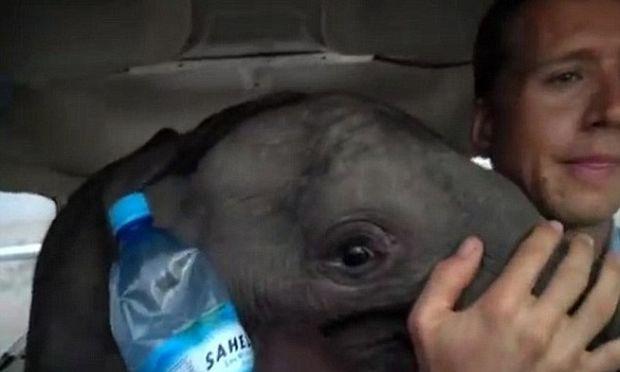 Μοναδικό βίντεο: Μετέφεραν τραυματισμένο μωρό-ελεφαντάκι με αεροπλάνο