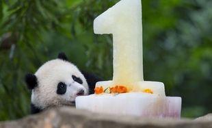 Δε θα πιστέψετε πώς γιόρτασε τα πρώτα του γενέθλια ένα μωρό-πάντα! (εικόνες,βίντεο)