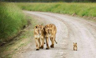 Οικογενειακά πορτραίτα από το ζωικό βασίλειο! (εικόνες)