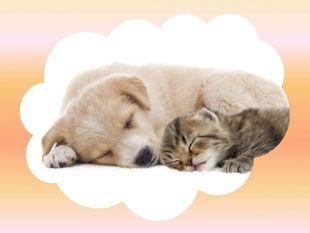 Οι συνήθειες ύπνου των ζωδίων!