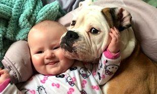 Εννέα σκύλοι, οι καλύτεροι babysitters!  (εικόνες)