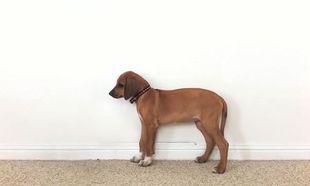 Από κουτάβι…ολόκληρος σκύλος μέσα σε 23 δευτερόλεπτα! (βίντεο)