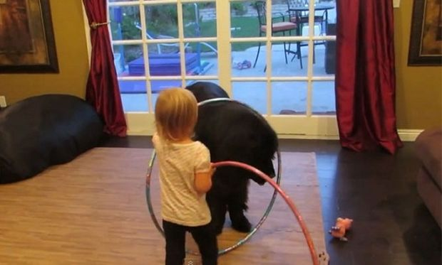 Απολαυστικό: Κοριτσάκι μαθαίνει στον σκύλο του χούλα χουπ! (βίντεο)