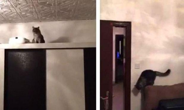 Απίστευτο: Δείτε την αντίδραση μιας γάτας όταν ακούει τον ήχο από το νερό της βρύσης (βίντεο)