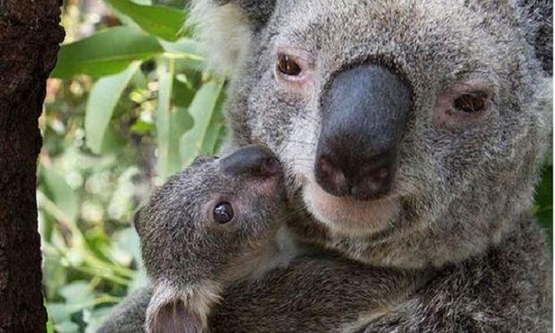 Απίστευτες φωτογραφίες μαμάδων του ζωικού βασιλείου με τα νεογέννητα μωρά τους (εικόνες)