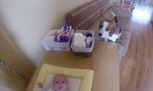 Απίστευτο και όμως αληθινό. Σκύλος βοηθάει τη μαμά να αλλάξει την πάνα του μωρού!(βίντεο)
