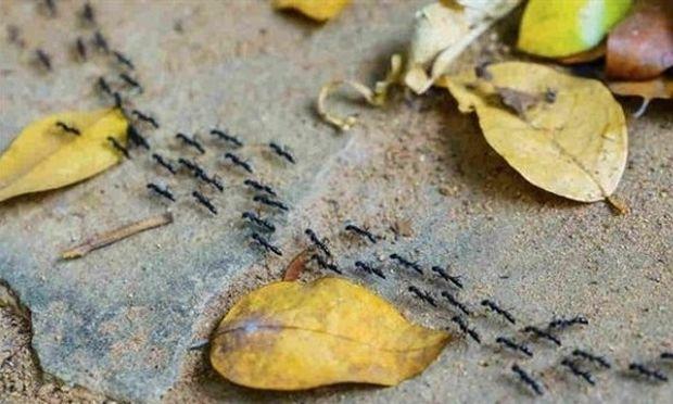 Έτσι θα εξαφανιστούν τα μυρμήγκια με φυσικό τρόπο!