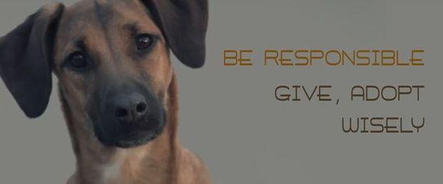 Despoina's little stories: «Σκέψου καλά πριν υιοθετήσεις ένα σκυλάκι!»