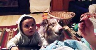 Αυτό σίγουρα δεν το έχετε ξαναδεί: Ο σκύλος ή το μωρό θα πει τη λέξη «μαμά» για να φάει; (βίντεο)
