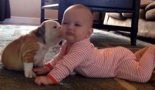 Ξεκαρδιστικό: Δείτε τι κάνει στο μωρό ο σκύλος της οικογένειας! (βίντεο)