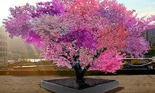 Υπάρχει δέντρο που βγάζει 40 ειδών φρούτα; Υπάρχει! (βίντεο)