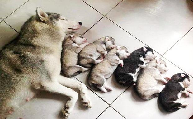 Μοναδικές φωτογραφίες: Νεογέννητα σκυλάκια στην αγκαλιά της μητέρας τους (εικόνα)